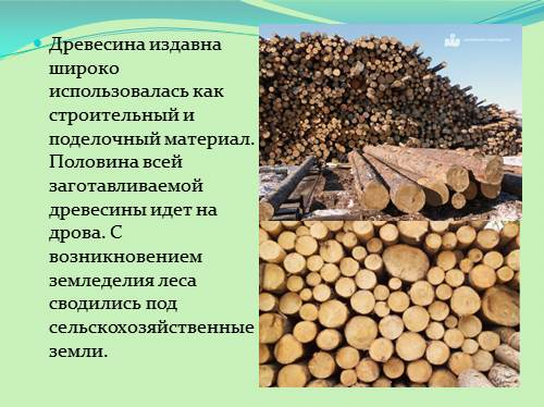 что такое заготовка древесины где и как она используетьс¤