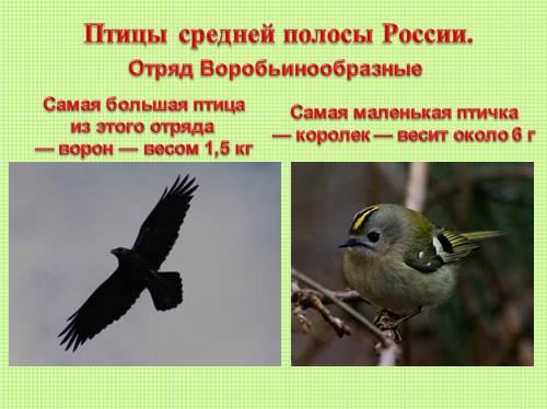 птица средней полосы крупного размера 803206933