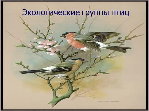 Экологические группы птиц