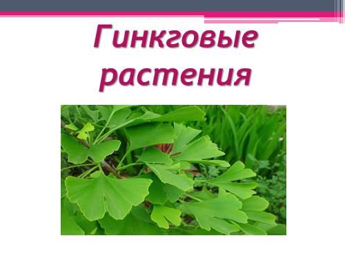 Гинкговые растения