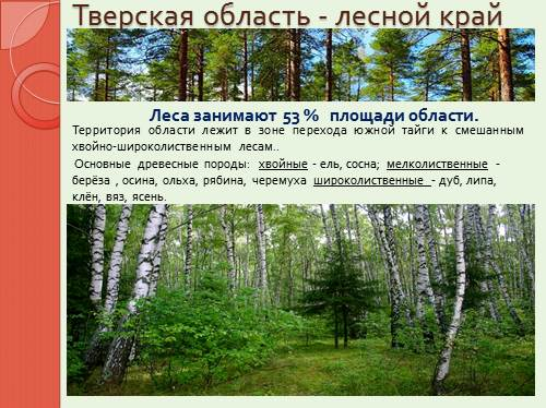 Доклад леса тверской области 7880