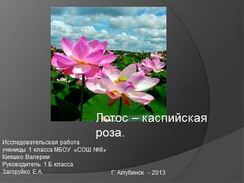 Лотос — Каспийская роза