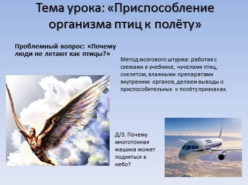 Особенности полёта птиц с чем эти особенности связаны