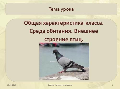 Общая характеристика класса Птиц. Среда обитания. Внешнее строение птиц
