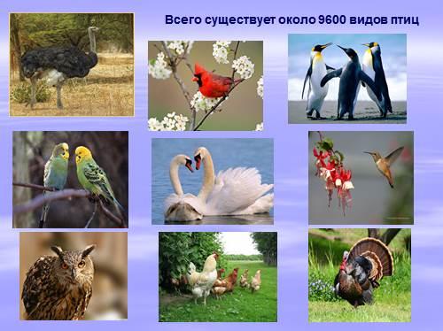 Общая характеристика класса Птицы — Внешнее строение птиц