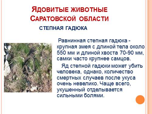 ядовитые пауки в саратовской области фото