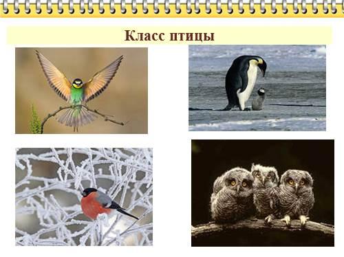 Опорно-двигательная система птиц