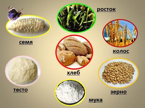 откуда хлеб пришел картинки