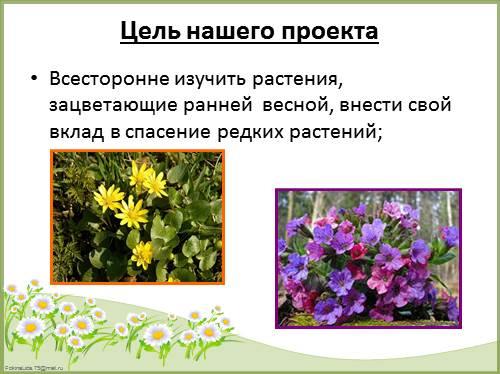 Растения ранней весны картинки