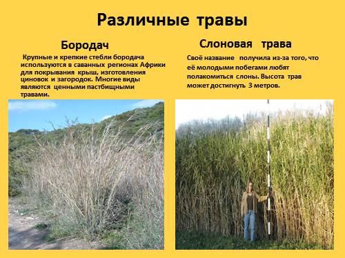 травяной сбор от паразитов