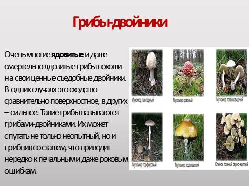 смертельно опасные грибы фото