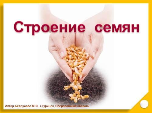 Презентация - Строение семян