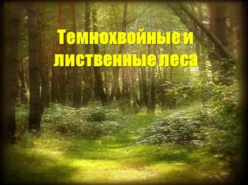 Темнохвойные и лиственные леса