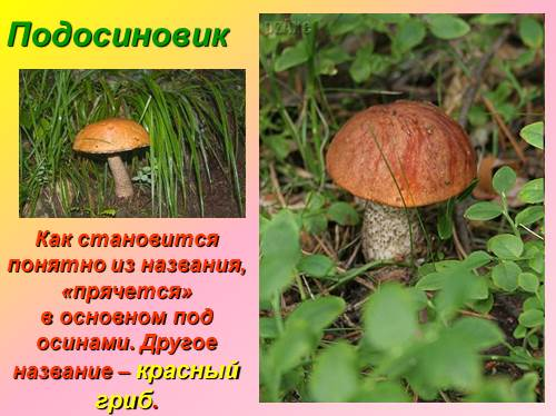 Половое размножение грибов - вопрос довольно сложный