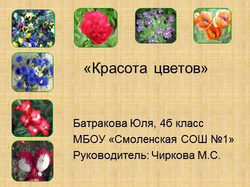 Цветы — Красота цветов