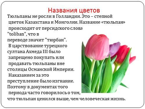 para-tyulpanov-chistiy-perevod-na-russkom-yazike-foto-anal-vzroslih-dam