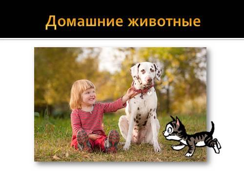 Викторина о котах и кошках