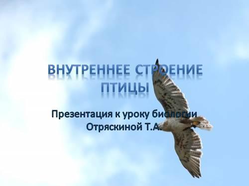 Внутреннее строение птиц