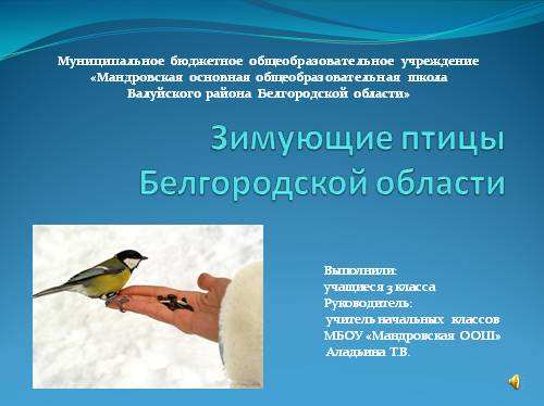 Зимующие птицы Белгородской области