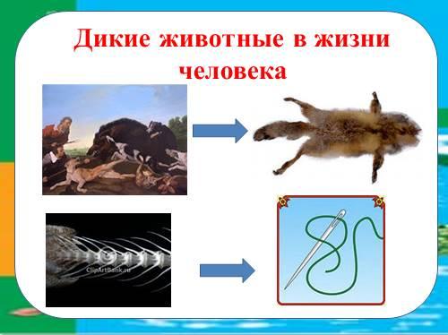Презентация Значение Животных В Природе И Жизни Человека 5 Класс