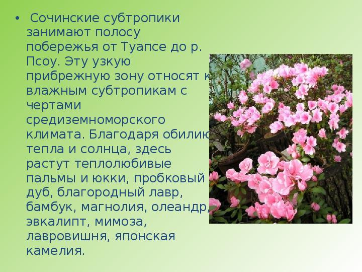 Что характерно для субтропиков выращивание цитрусовых культур 62
