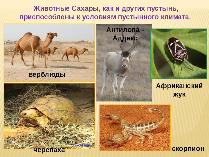 какие животные живут в пустыни стоит останавливаться полпути: