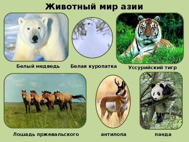 Реферат животный мир евразии 1921