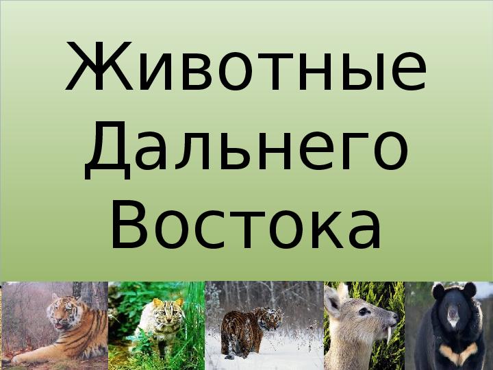Презентация Дальний Восток, растительный и животный мир