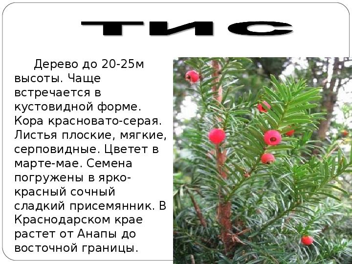 Растения из красной книги кубани фото и описание
