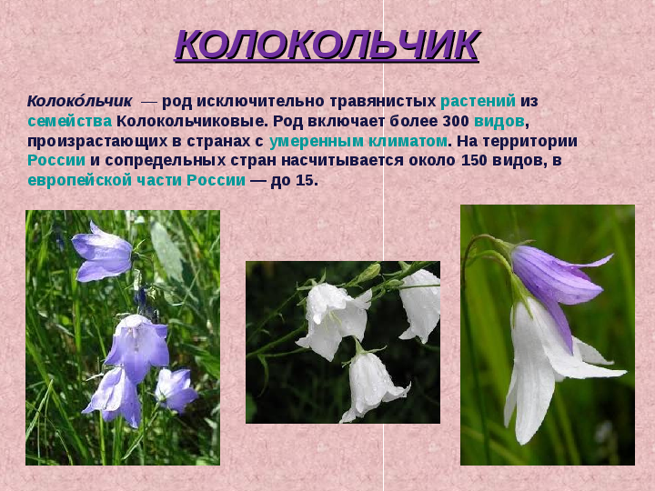 Реферат на тему растения из красной книги 5267