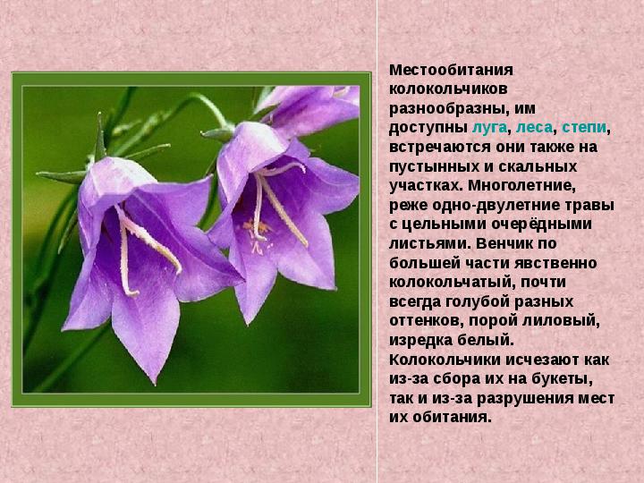 radiatsionnaya-prezentatsiya-po-ekologii-krasnaya-kniga-rasteniy-3-klass-kazahskom-yazike-referat