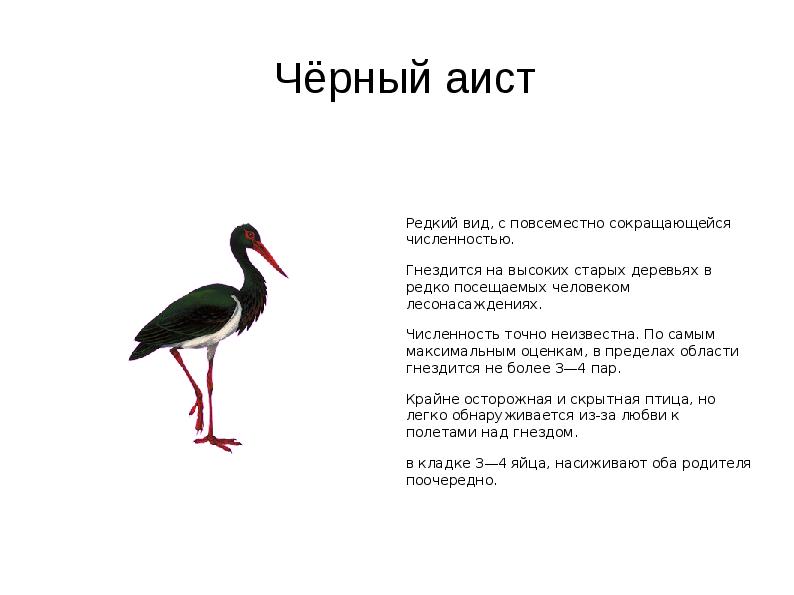 Чёрный Аист Красная Книга Фото