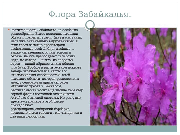 Красная книга читинской области растения скачать