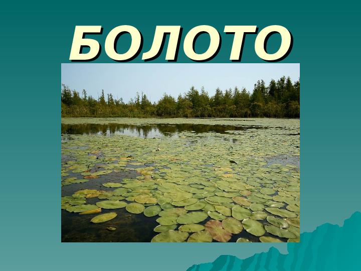 Презентация Обитатели болот