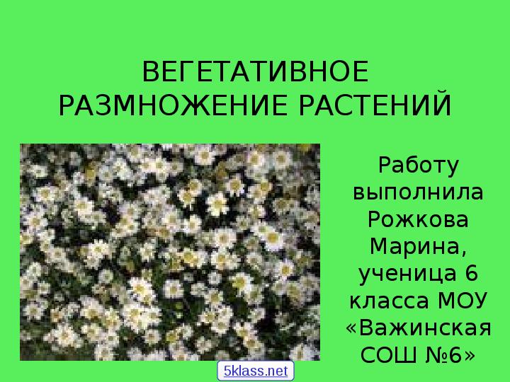 Презентация Вегетативное размножение растений, 6 класс