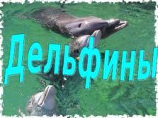 Презентация Дельфины
