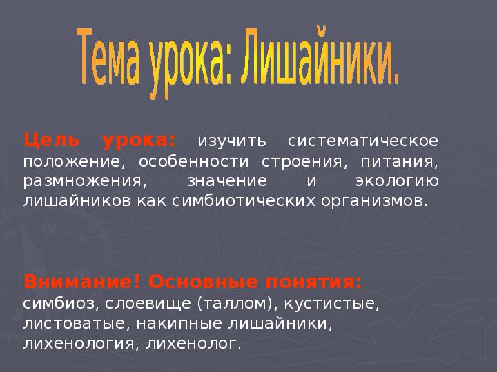 Презентация Грибы и лишайники