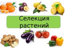 Презентация Селекция растений