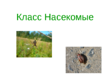 Презентация Класс насекомые