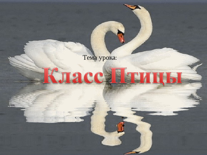 Презентация Птицы, 7 класс