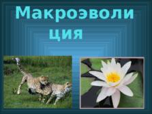 Презентация Макроэволюция