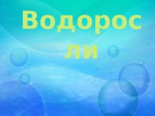 Презентация Водоросли, 6 класс
