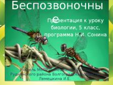 Презентация Беспозвоночные животные, 5 класс