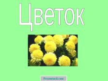 Презентация Цветы