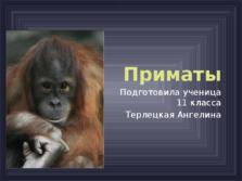 Презентация Приматы