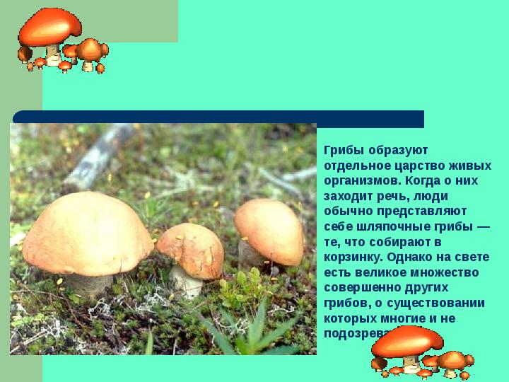 биология 6 класс тема грибы