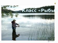 Презентация Класс Рыбы