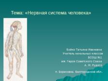 Презентация Нервная система человека