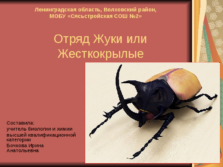 Презентация Отряд жуки