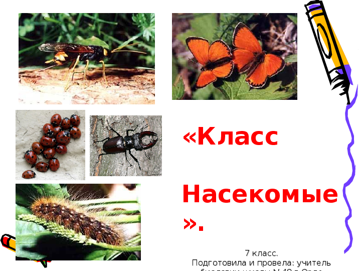 Доклад по биологии 7 класс класс насекомые